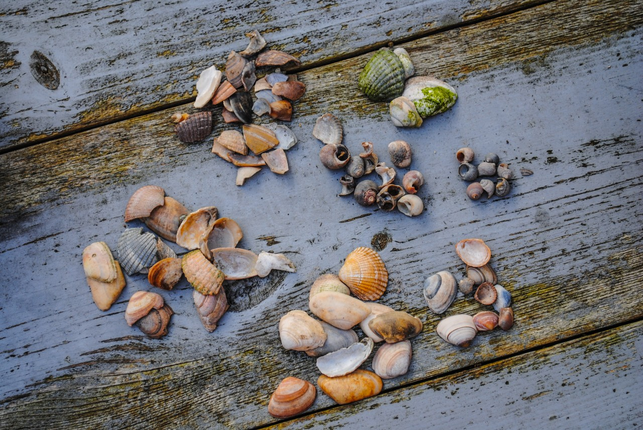 169390-shells-in-groups_1280x857.jpg